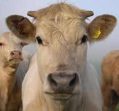 Clive Bundy Cattle news monitoring